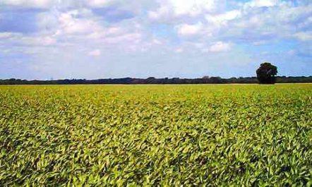 Wie umweltfreundlich sind Agrotreibstoffe?
