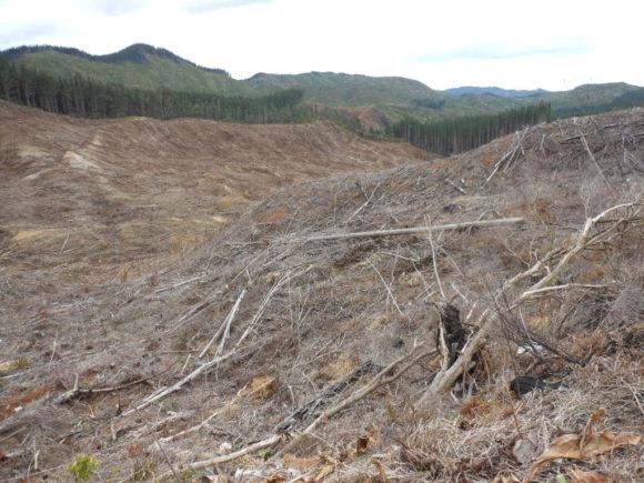 Rodung Waldgebiet Abholzung Neuseeland