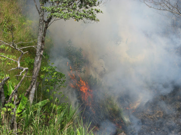 Brandrodung von Regenwald in Papua-Neuguinea zur Biospritherstellung ILUC