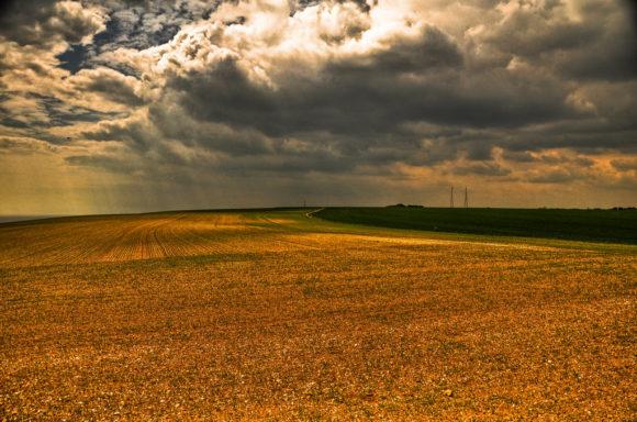 Biosprit: Entstehen von Monokulturen Mais Zuckerrohr Ethanol