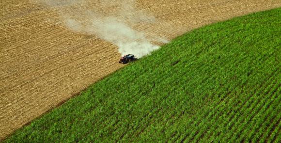 Biosprit: Entstehen von Monokulturen in den USA Zuckerrohr Ethanol