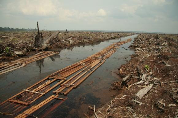 Waldrodungen in Indonesien große Gebiete sind für lange Zeit unbewohnt