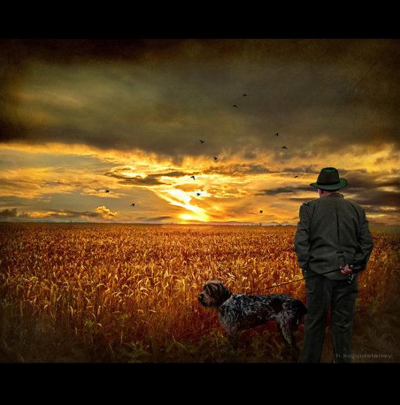 Landwirtschaft Biotreibstoffe Biodiesel Sonnenuntergang Weizen Feld
