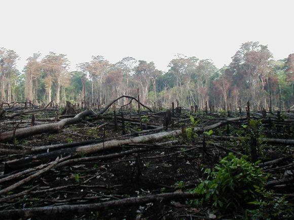 ILUC Brandrodung von Regenwaldfläche um Ackerland für Biosprit zu gewinnen
