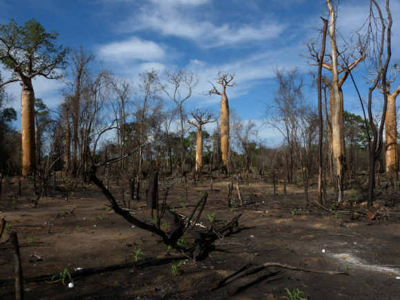 Abholzung des regenwaldes in Madagaskar mittels Brandrodung