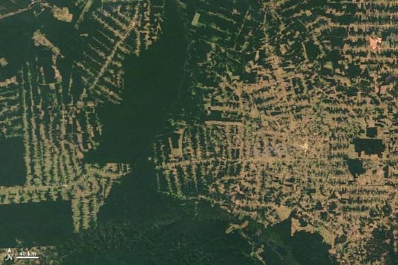 Kahlschlag im Amazonasgebiet Brasilien Satellitenbild NASA
