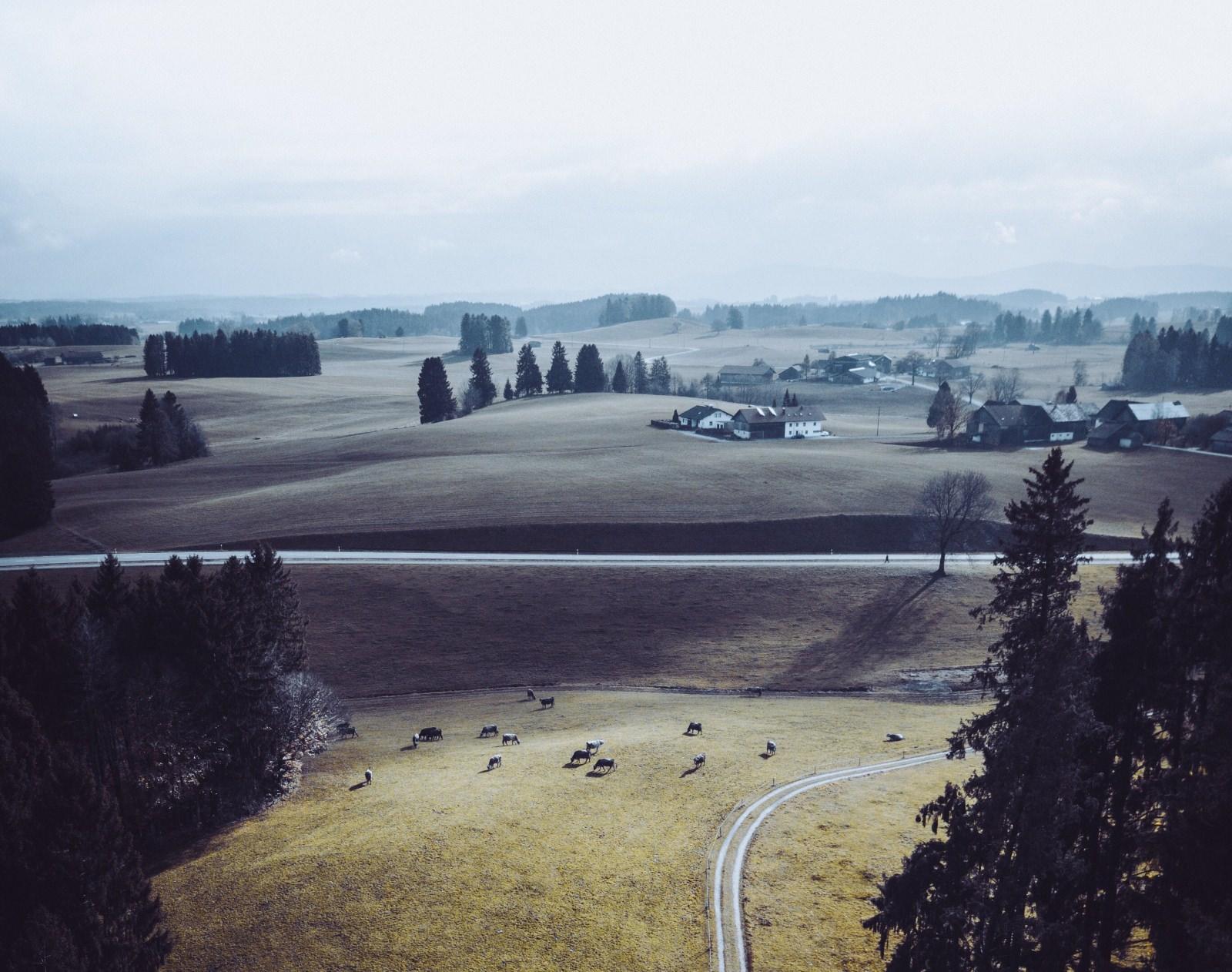 Ländlicher Raum Wald Feld Kühe Straßennetz Land Wald Deutschland